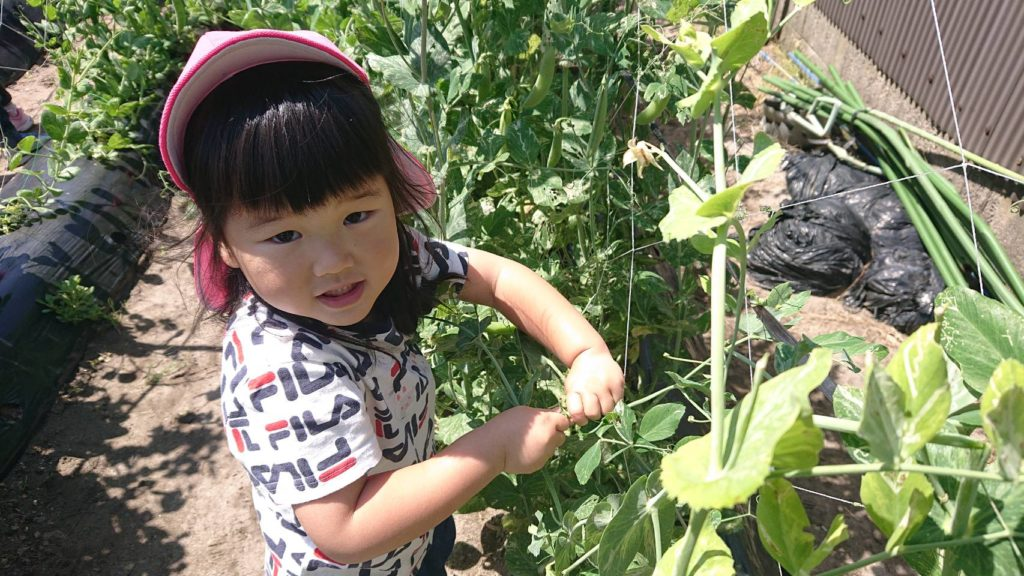 彦名保育園の収穫体験